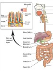 Go to Crohn's Disease Symptoms  - Could This Be Your Problem?