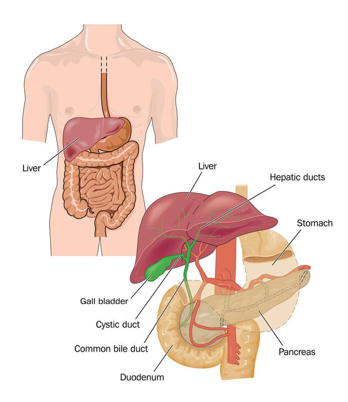 Green Diarrhea - the gall bladder and the intestinal tract