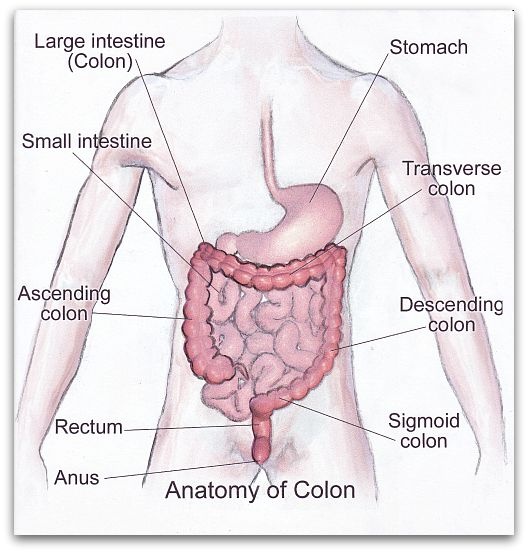 Ulcerative Colitis Symptoms - Diagram of The Large Intestine