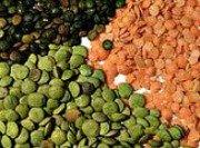 Colonoscopy Diet - Lentils Not Allowed