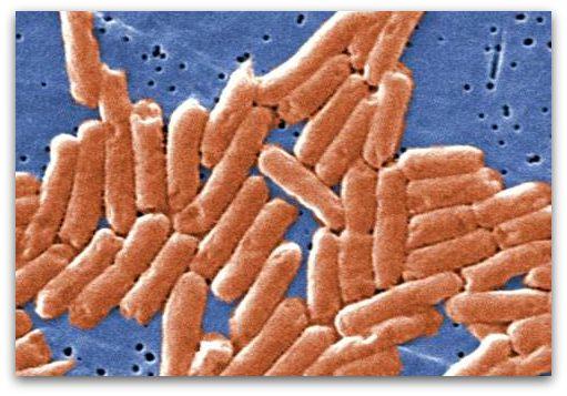 Salmonella Symptoms - Rod Shaped Salmonella Bacteria